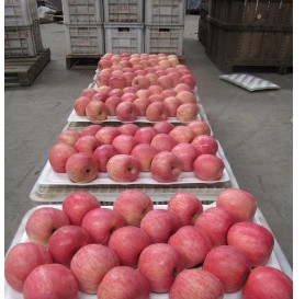 10kg packing apples