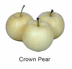 Crown Pear